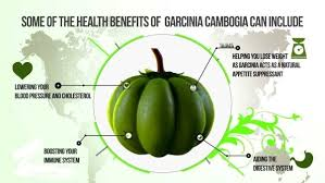 My pure garcinia cambogia diet - instructions - France - la revue
